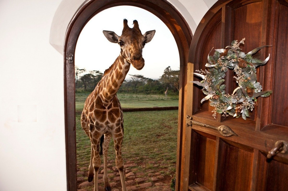 AD-Girrafe-Manor-Nairobi-Kenya-03