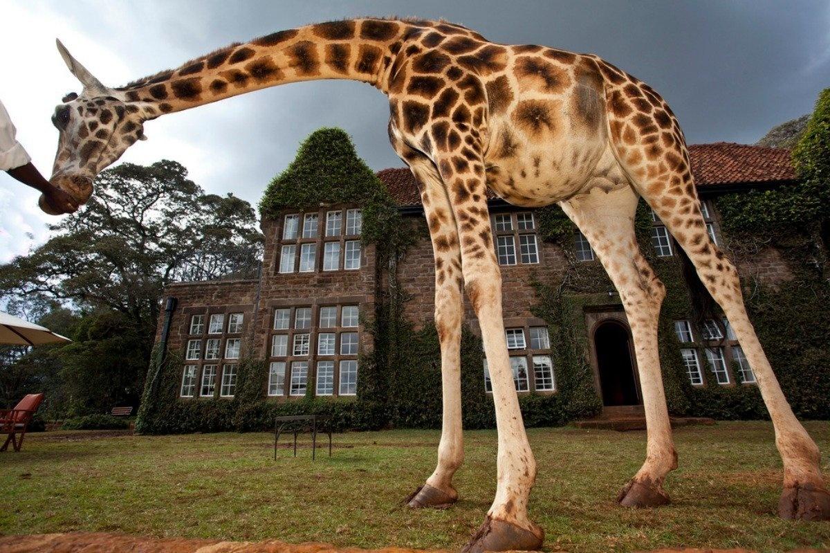 AD-Girrafe-Manor-Nairobi-Kenya-07