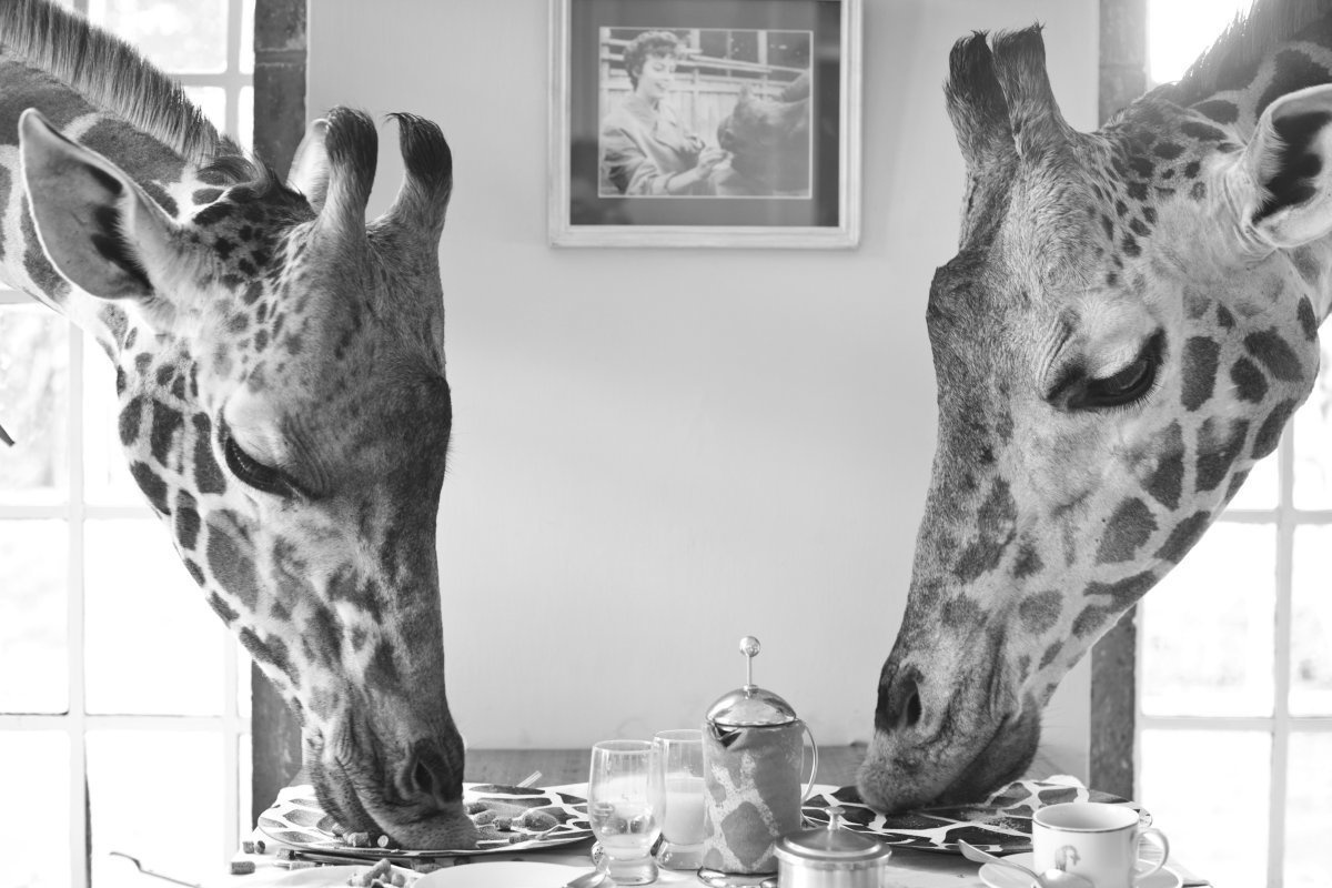 AD-Girrafe-Manor-Nairobi-Kenya-09