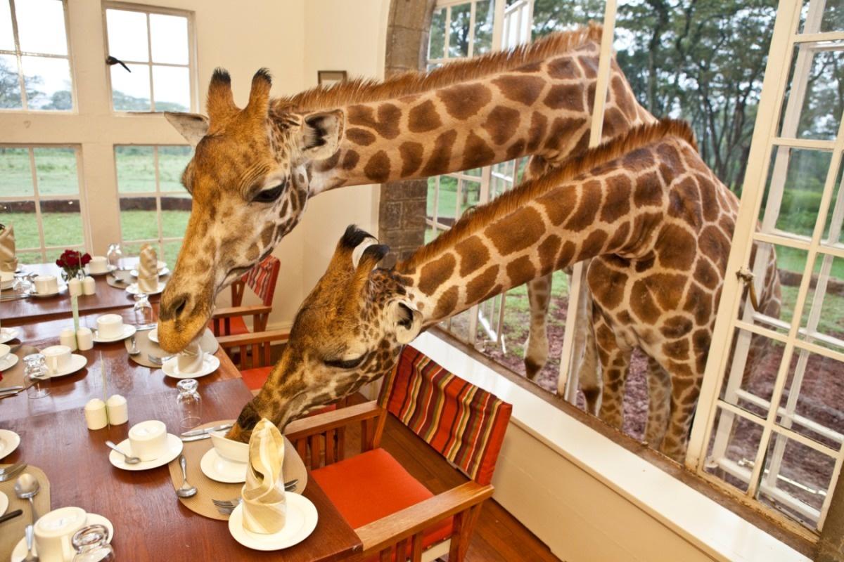 AD-Girrafe-Manor-Nairobi-Kenya-11