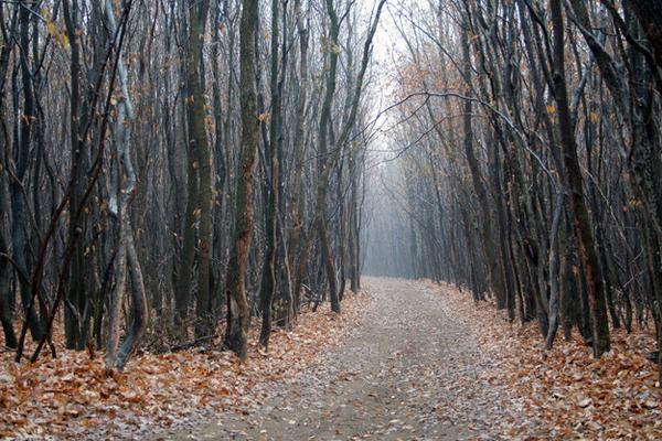 01-Hoia-Baciu-Forest-Romania-AD