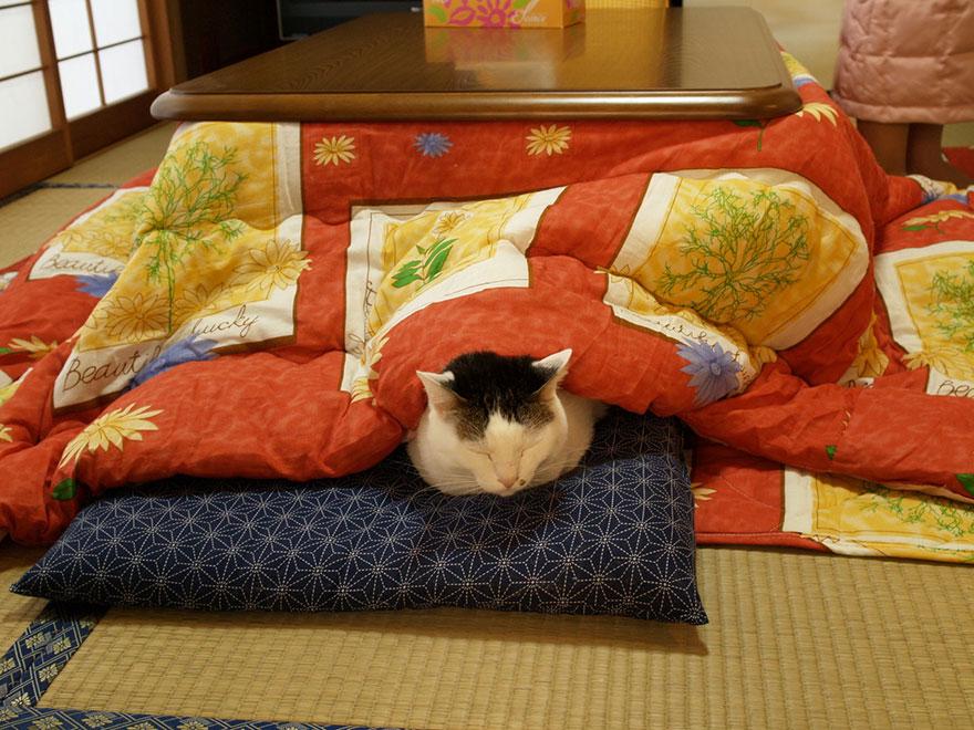 AD-Kotatsu-Japanese-Heating-Bed-Table-08
