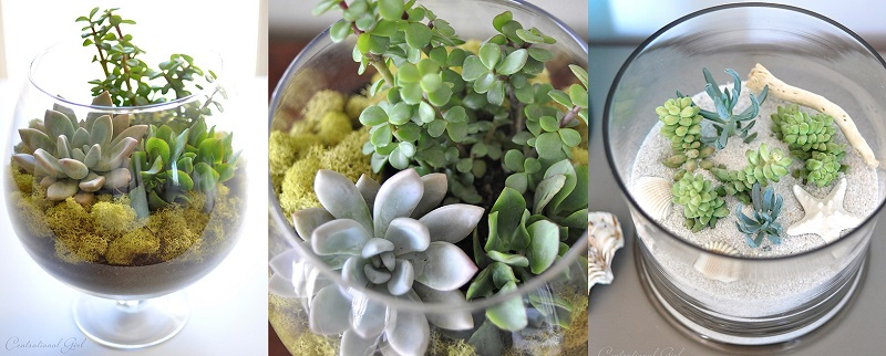 AD-Adorable-Miniature-Terrarium-Ideas-For-You-To-Try-16