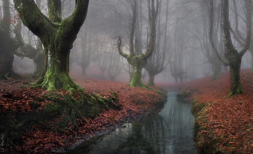 AD-The-34-Most-Beautifu-Forests-In-The-World-20