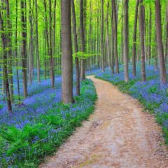 The 34 Most Beautiful Forests In The World… I'd Love To Walk Barefoot Through #26.