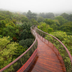 This Canopy Walkway Lets You Walk Above The Trees In Cape Town