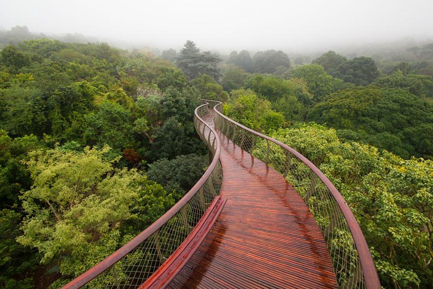 AD-Tree-Canopy-Walkway-Path-Kirstenbosch-National-Botanical-Garden-01