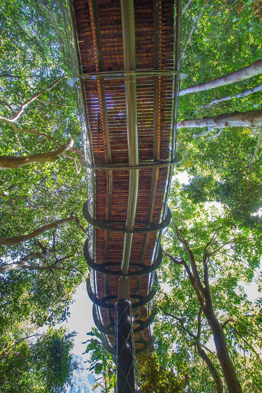 AD-Tree-Canopy-Walkway-Path-Kirstenbosch-National-Botanical-Garden-04