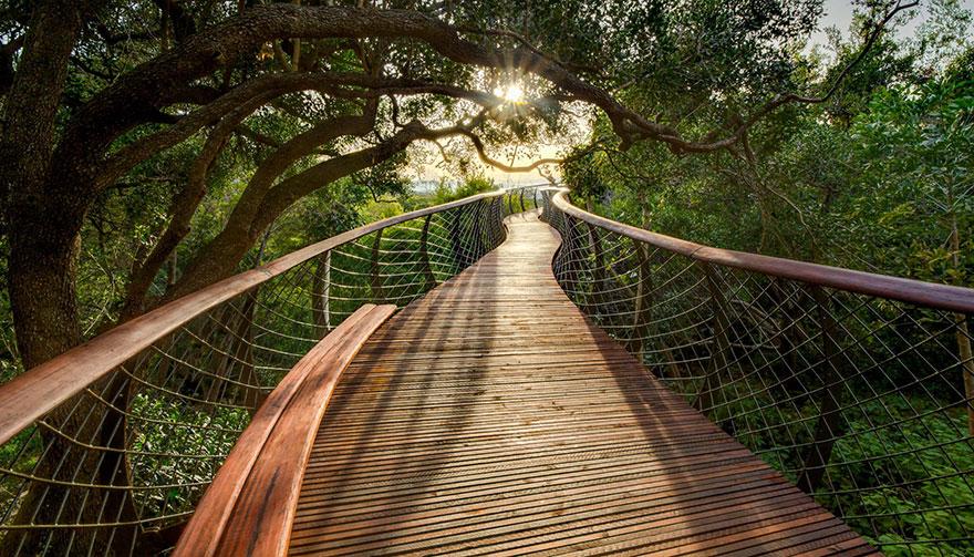 AD-Tree-Canopy-Walkway-Path-Kirstenbosch-National-Botanical-Garden-05