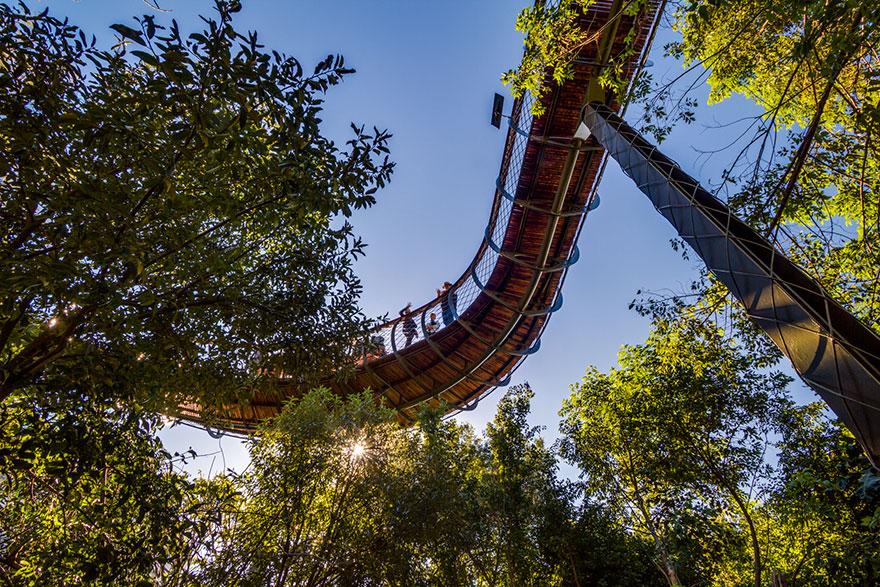 AD-Tree-Canopy-Walkway-Path-Kirstenbosch-National-Botanical-Garden-08