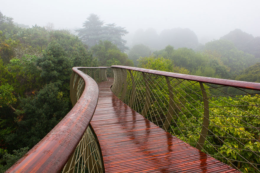 AD-Tree-Canopy-Walkway-Path-Kirstenbosch-National-Botanical- & This Canopy Walkway Lets You Walk Above The Trees In Cape Town ...
