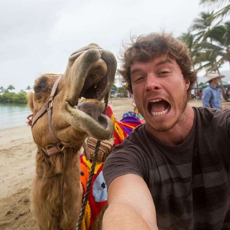 AD-Allan-Dixon-Funny-Animal-Selfies-03