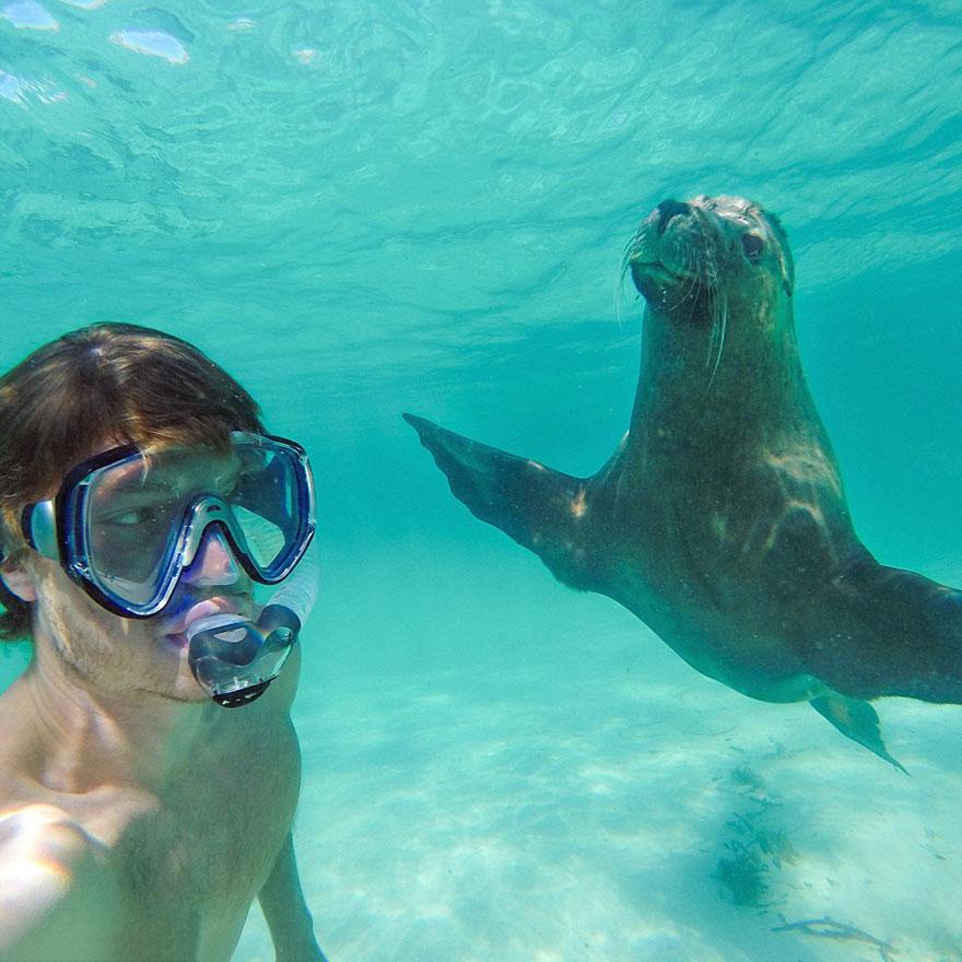 AD-Allan-Dixon-Funny-Animal-Selfies-10