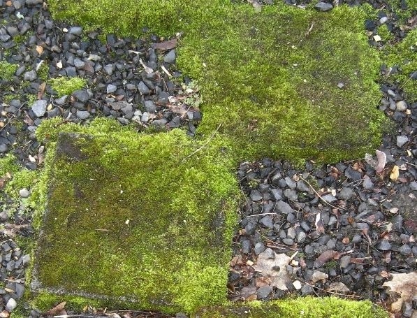 AD-Beautiful-DIY-Stepping-Stone-Ideas-To-Decorate-Your-Garden-18