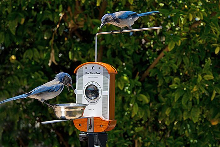 AD-Creative-Gift-Ideas-For-Bird-Lovers-37