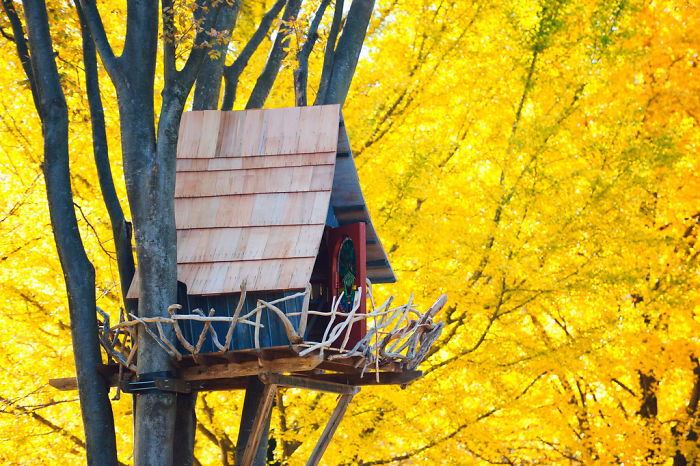 AD-The-Most-Beautiful-Treehouses-From-All-Over-The-World-15