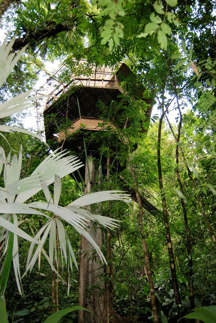 AD-The-Most-Beautiful-Treehouses-From-All-Over-The-World-34