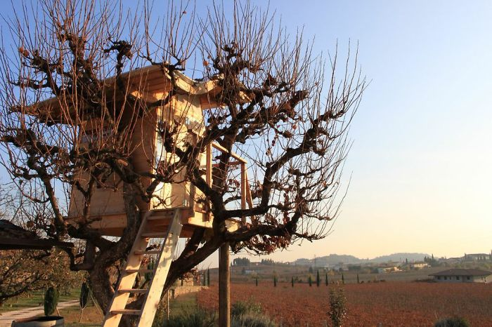 AD-The-Most-Beautiful-Treehouses-From-All-Over-The-World-43
