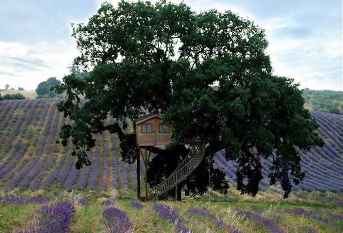 AD-The-Most-Beautiful-Treehouses-From-All-Over-The-World-53