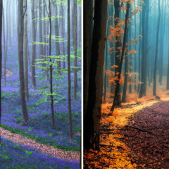25+ Magical Paths Begging To Be Walked