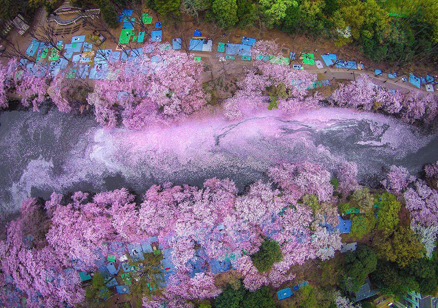 AD-Magical-Pics-Of-Japan's-Cherry-Blossom-By-National-Geographic-01