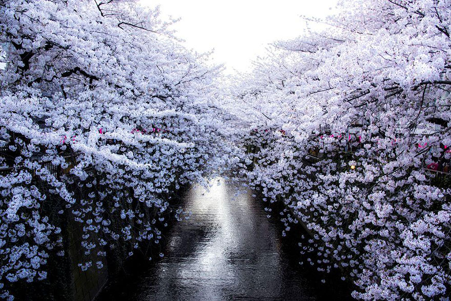 AD-Magical-Pics-Of-Japan's-Cherry-Blossom-By-National-Geographic-02