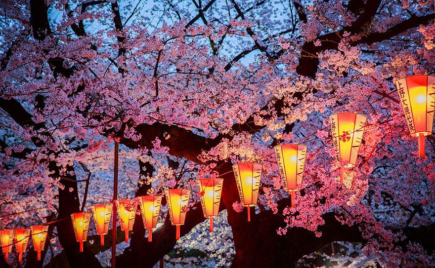 AD-Magical-Pics-Of-Japan's-Cherry-Blossom-By-National-Geographic-04