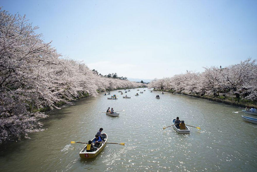 AD-Magical-Pics-Of-Japan's-Cherry-Blossom-By-National-Geographic-05