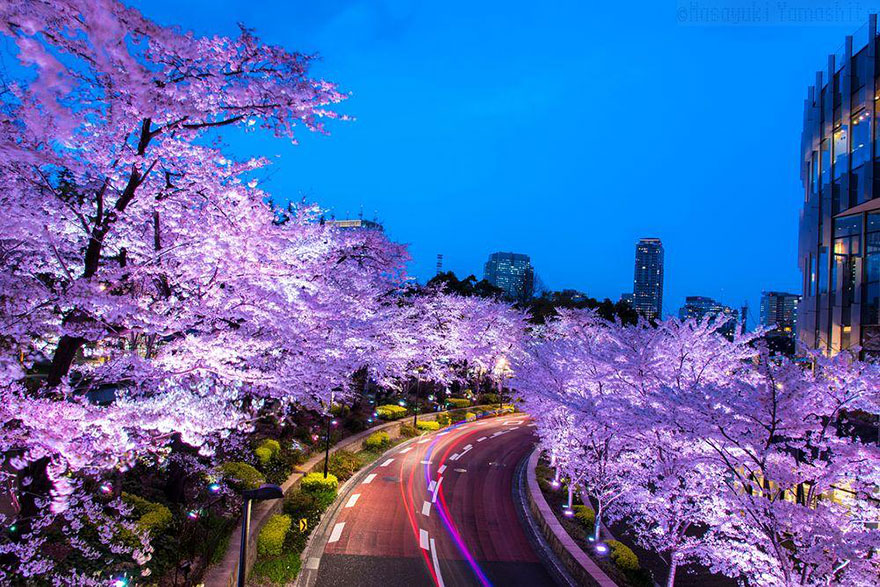 AD-Magical-Pics-Of-Japan's-Cherry-Blossom-By-National-Geographic-06