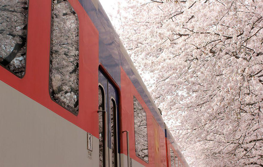 AD-Magical-Pics-Of-Japan's-Cherry-Blossom-By-National-Geographic-08