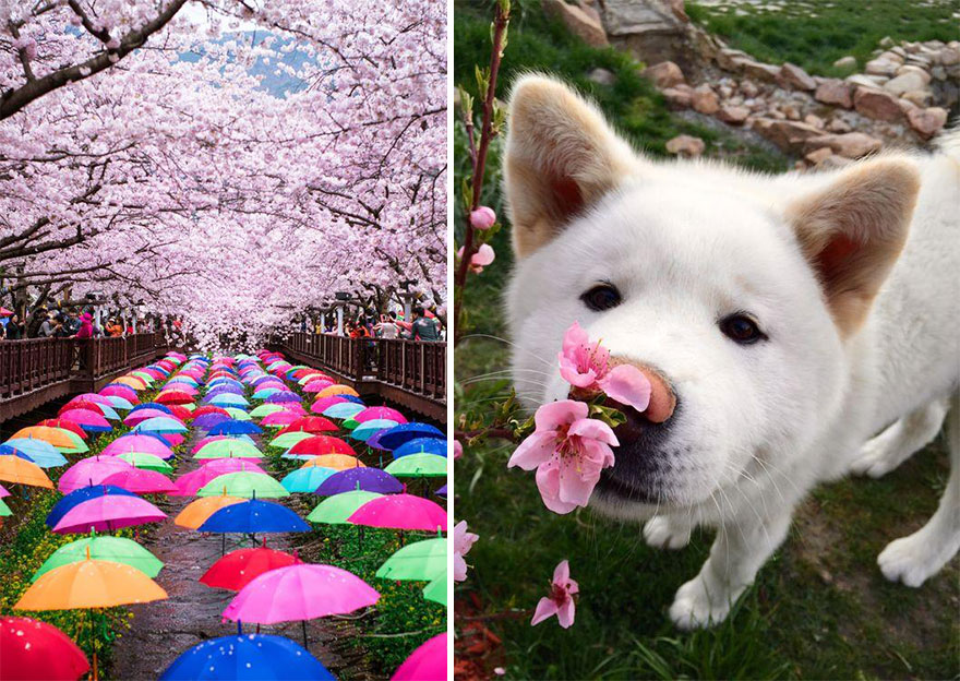 AD-Magical-Pics-Of-Japan's-Cherry-Blossom-By-National-Geographic-09