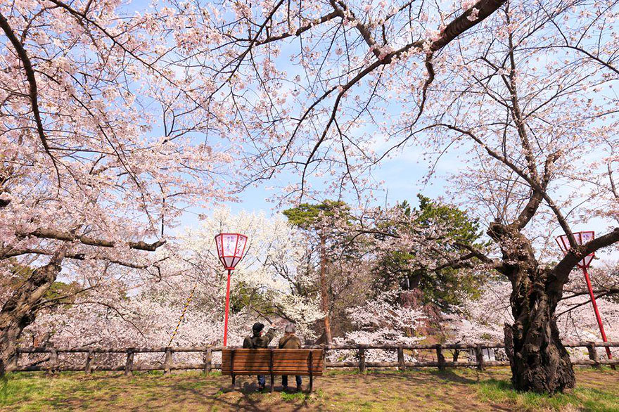 AD-Magical-Pics-Of-Japan's-Cherry-Blossom-By-National-Geographic-11