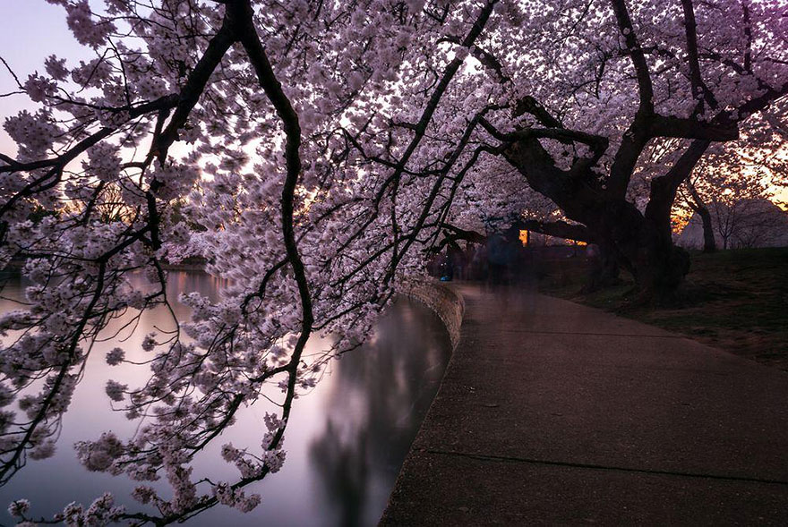 AD-Magical-Pics-Of-Japan's-Cherry-Blossom-By-National-Geographic-13