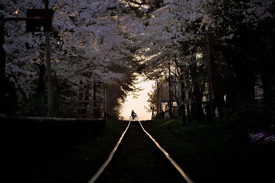 AD-Magical-Pics-Of-Japan's-Cherry-Blossom-By-National-Geographic-14