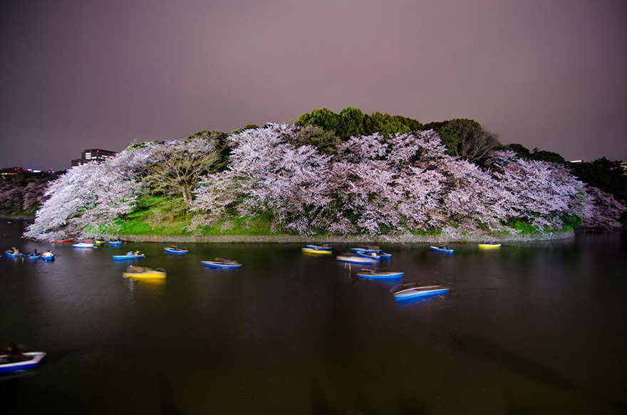 AD-Magical-Pics-Of-Japan's-Cherry-Blossom-By-National-Geographic-16