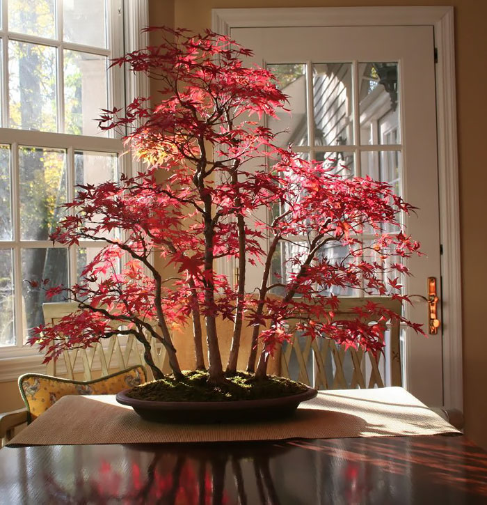 AD-Amazing-Bonsai-Trees-04