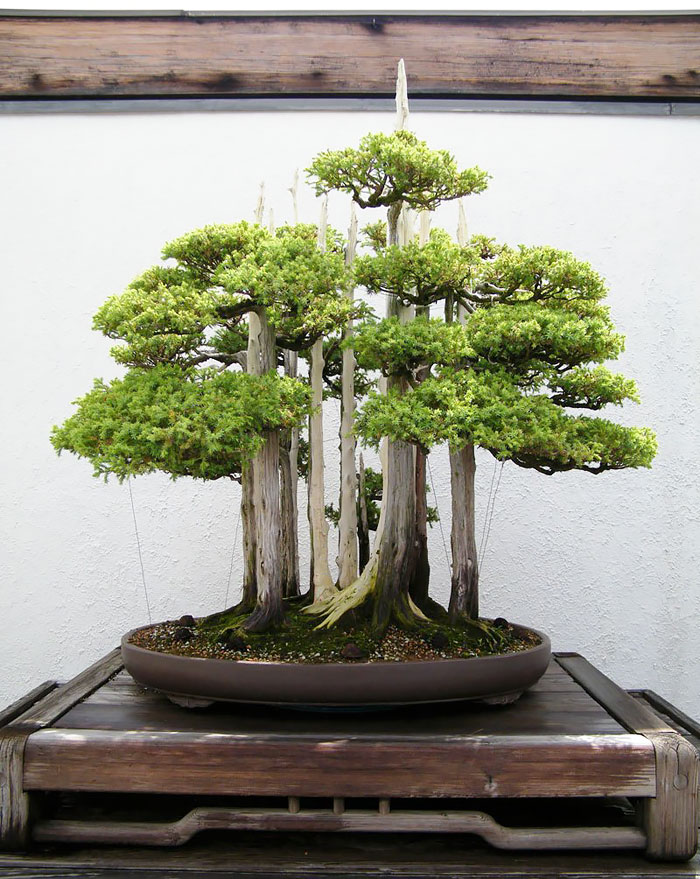 AD-Amazing-Bonsai-Trees-09