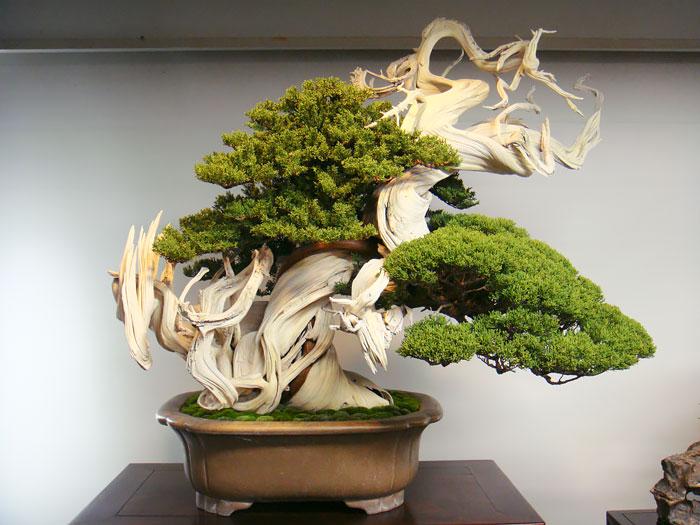 https://cdn.architecturendesign.net/wp-content/uploads/2016/04/AD-Amazing-Bonsai-Trees-10.jpg
