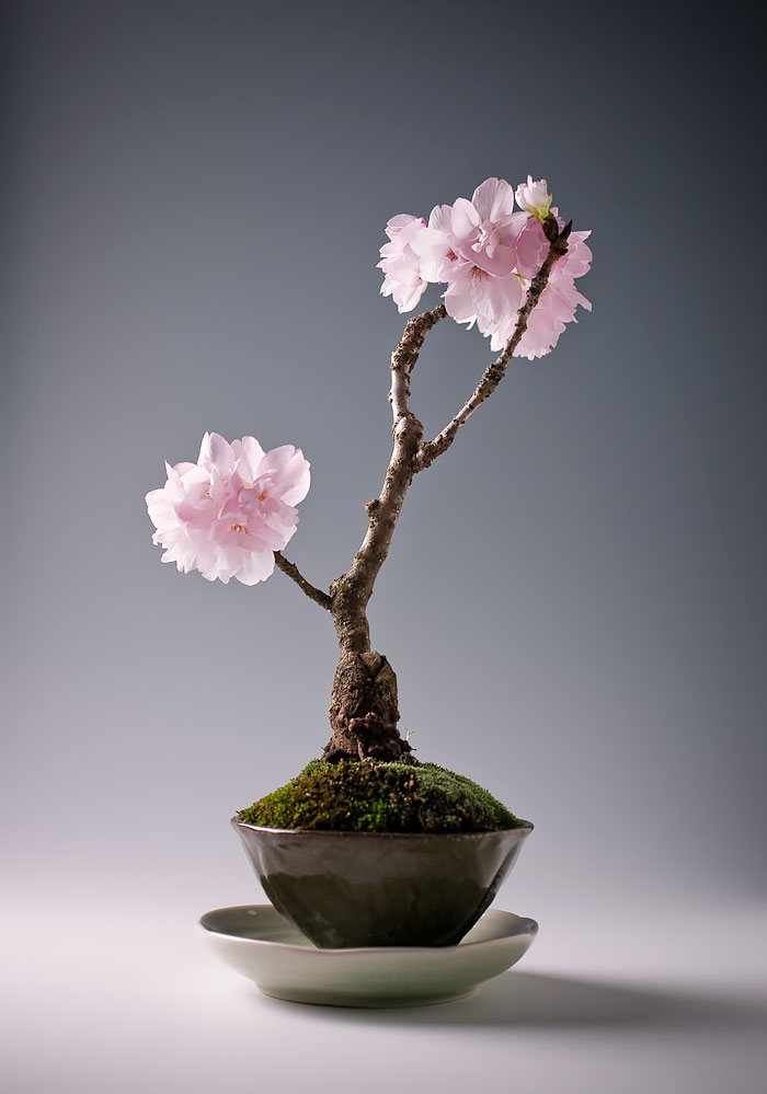 AD-Amazing-Bonsai-Trees-13