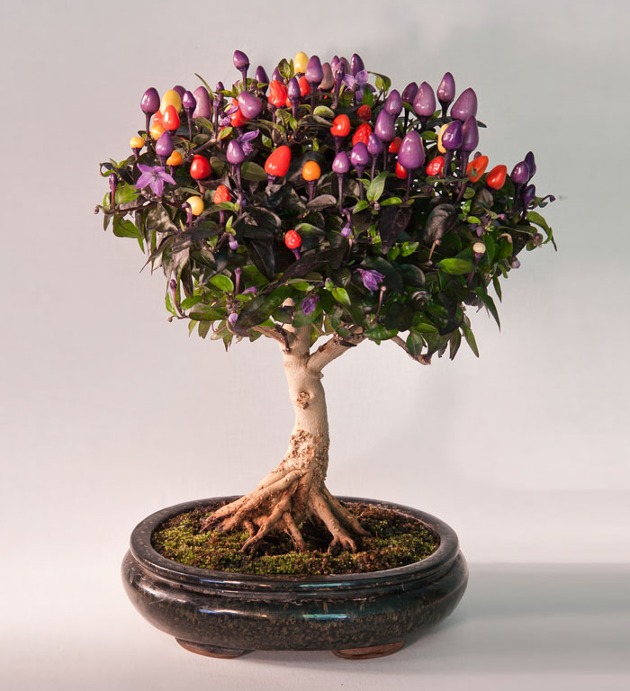 AD-Amazing-Bonsai-Trees-16