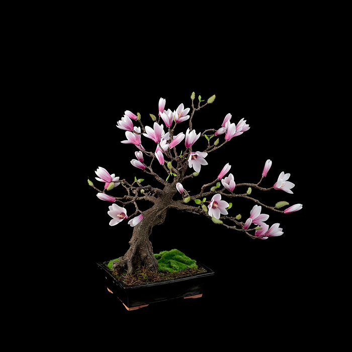 AD-Amazing-Bonsai-Trees-17