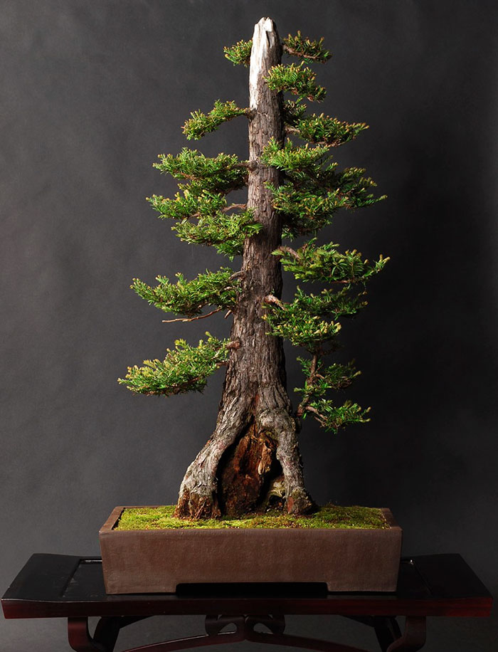 AD-Amazing-Bonsai-Trees-18