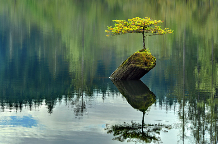 AD-Amazing-Bonsai-Trees-19