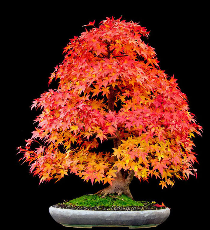 AD-Amazing-Bonsai-Trees-21
