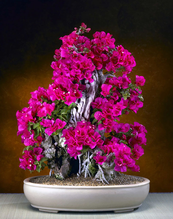AD-Amazing-Bonsai-Trees-28