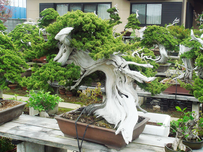 AD-Amazing-Bonsai-Trees-29