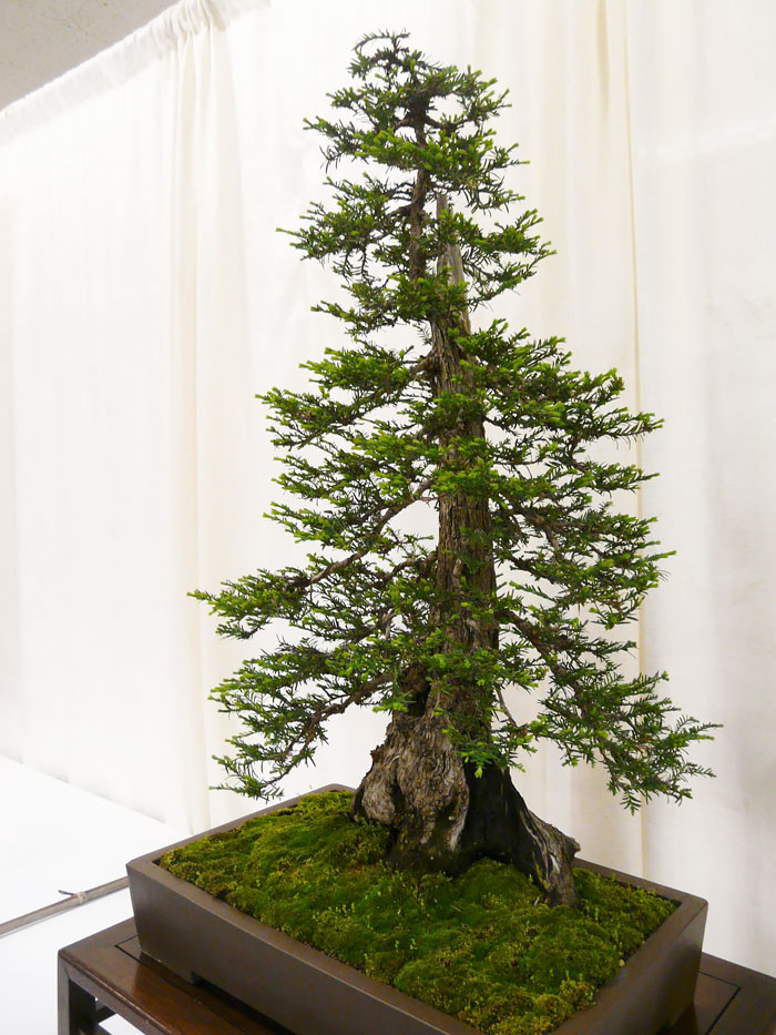 AD-Amazing-Bonsai-Trees-30