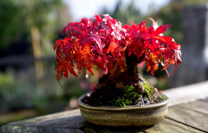 AD-Amazing-Bonsai-Trees-33