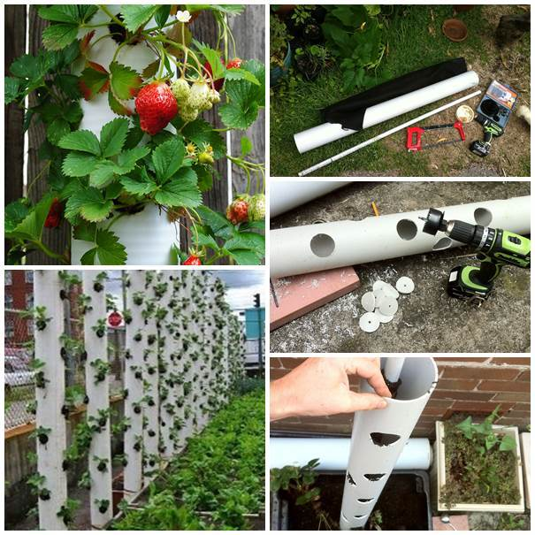AD-Creative-Uses-of-PVC-Pipes-in-Your-Home-and-Garden-05
