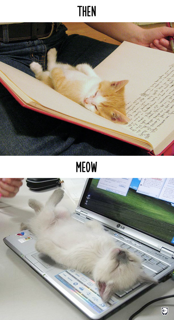 AD-Then-Now-How-Technology-Has-Changed-Cats-Lives-02